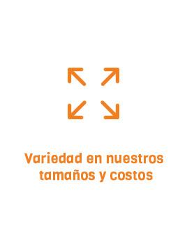 variedad-naranja